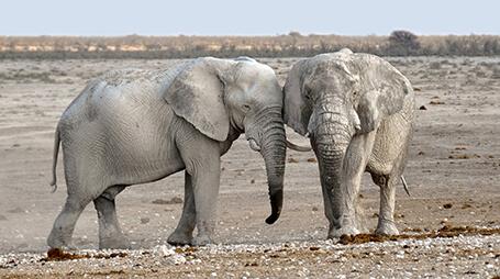 namibia-esigenti-list